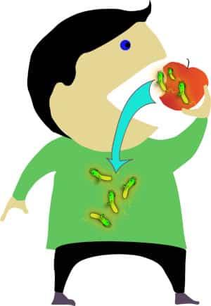 Apfelmikrobiom